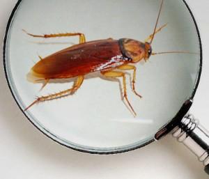 foto kakkerlakken